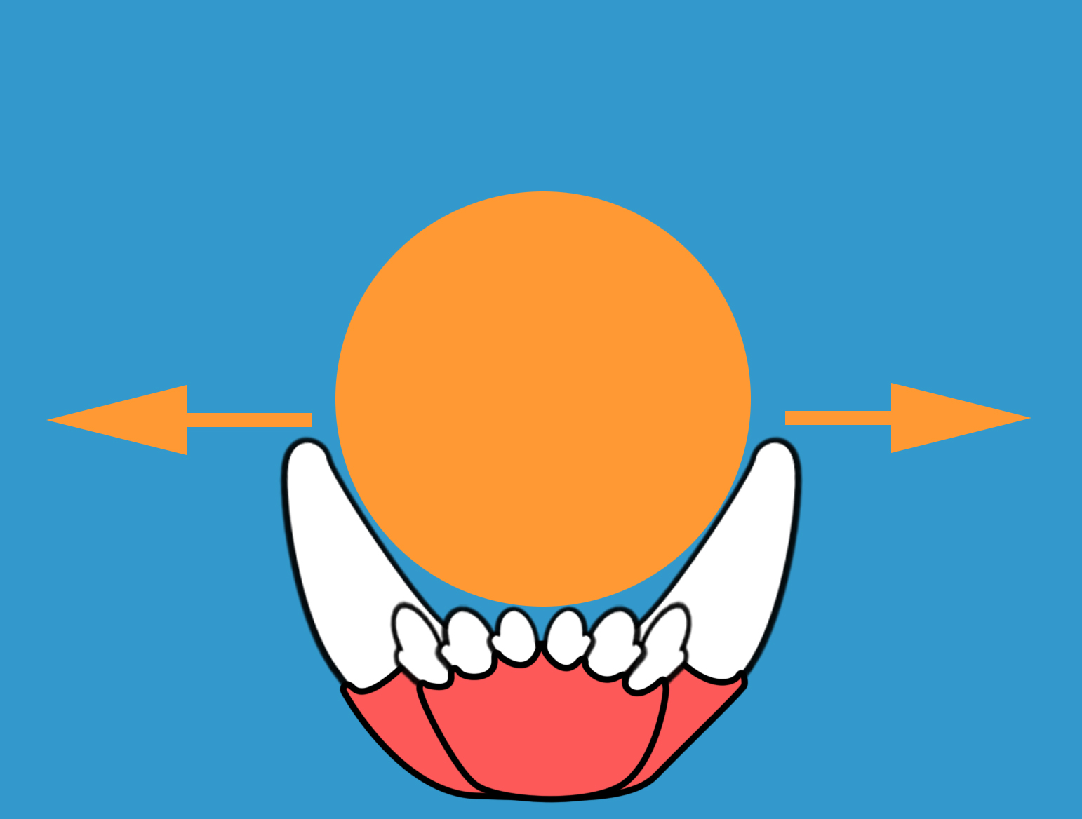 This ball is too small to effectively put outward force on the canine teeth.